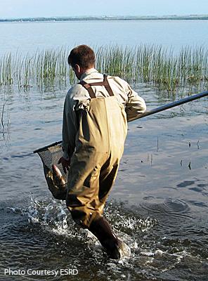 Releasing Walleye