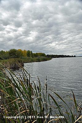 natural lakeshore vegetation