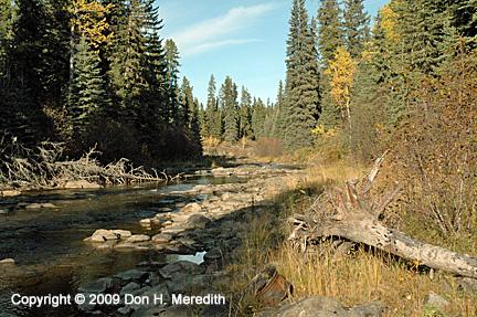 boreal river crossing