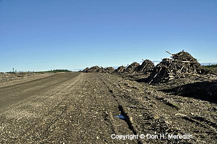 forest waste