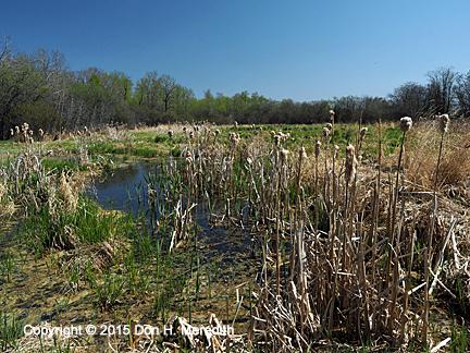 Wabamun wetland