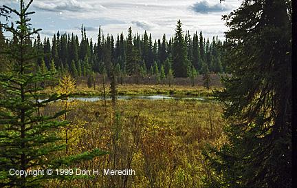 1999 Meredith-muskegpond-2
